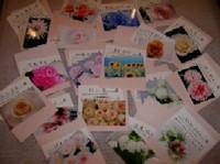 image_flower